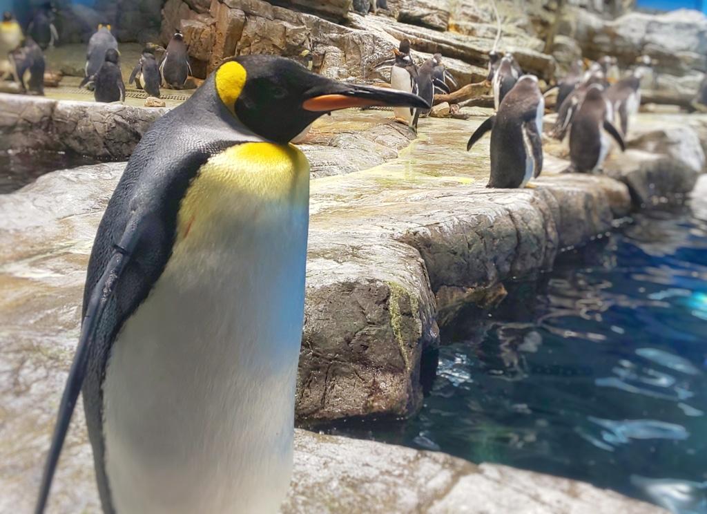 ペンギンの世界にもいろんなタイプがいますね あれ俺かな...