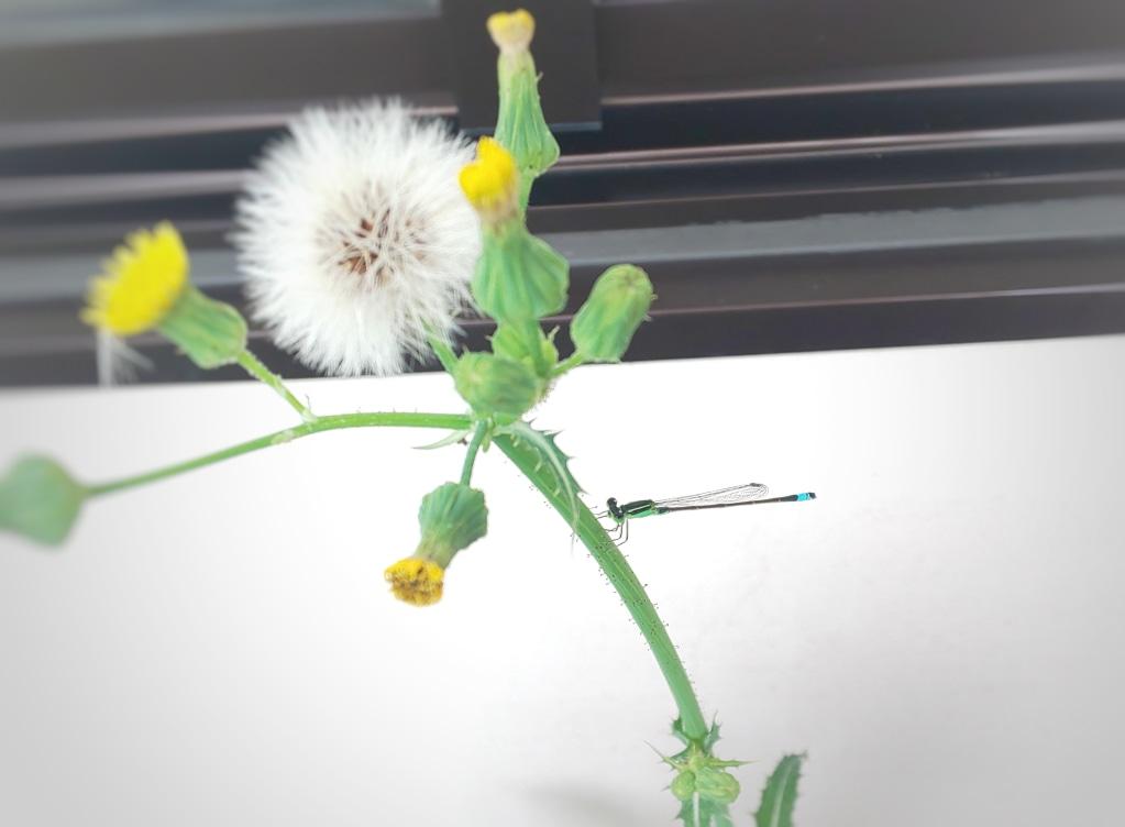 夏の虫たちも活動開始  季節外れの虫にも気をつけて...