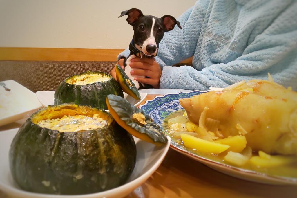 今日は犬の日 お家でハロウィンで 犬も喜ぶかぼちゃ料理 ...