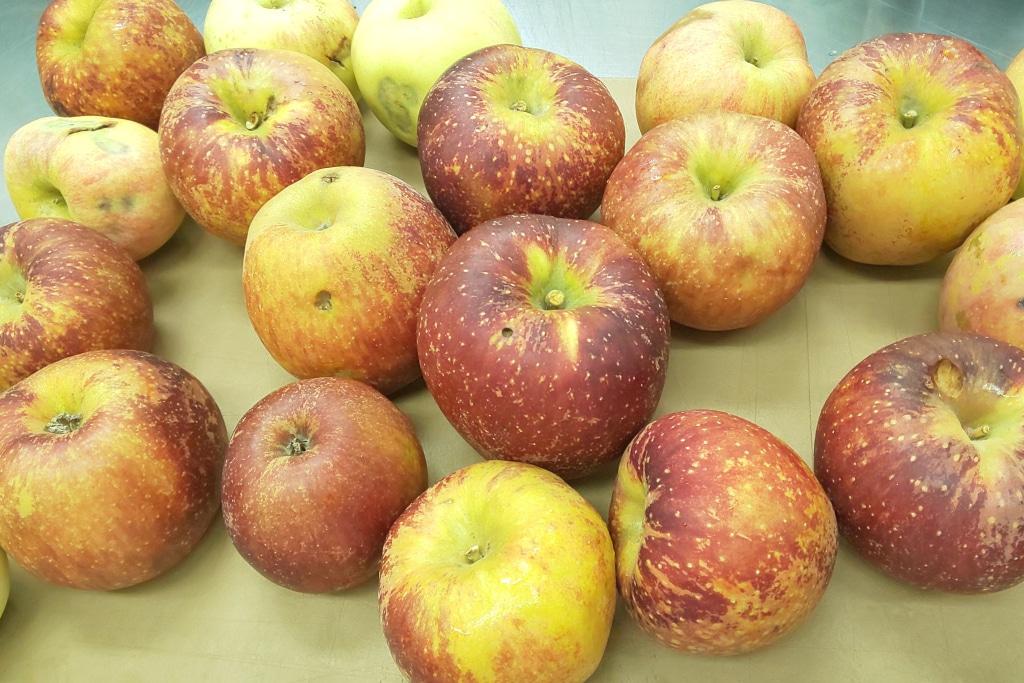 傷やアタリがあるリンゴでも味は一緒 大切に美味しいお菓子に仕上げます...