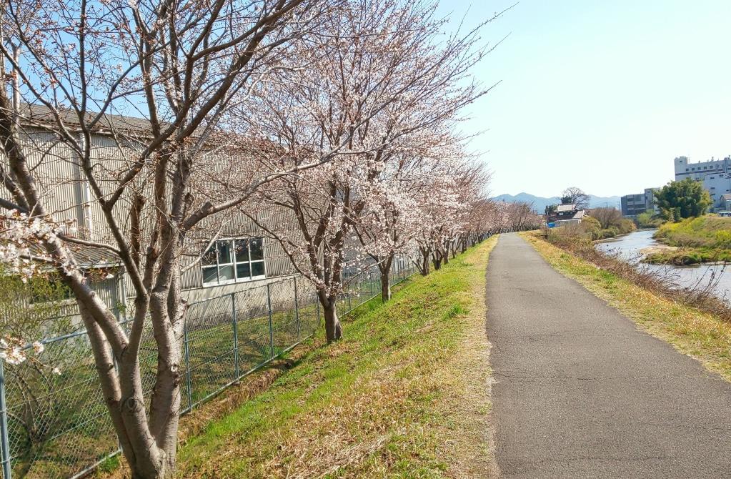 桜の満開は来週が見ごろかな