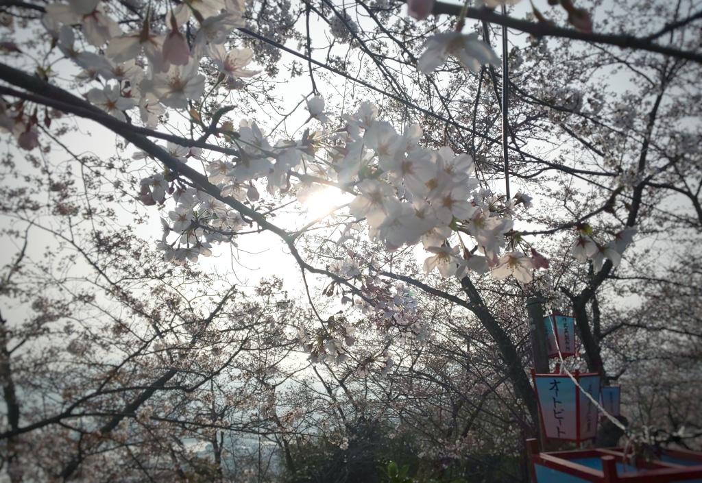 桜の名所でもコロナ感染対策 みんなしっかり我慢しています...