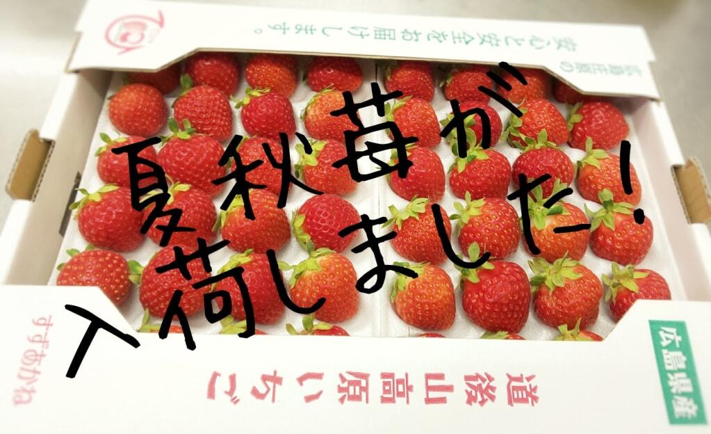 【広島産いちご】綺麗な赤い色はこの3市を落ち着かせる事ができるかな?...