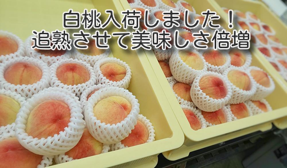 広島産の果物を入荷して【追熟】後にお創りするお菓子!2種類仲間入りします...